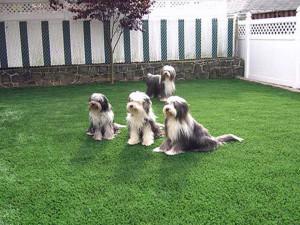 artificial-grass-installation-cincinnati-ohio-6381