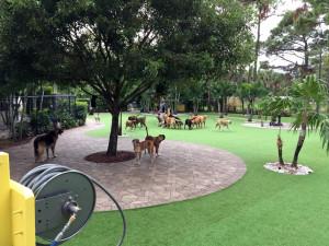 artificial-grass-installation-wellington-florida-8921
